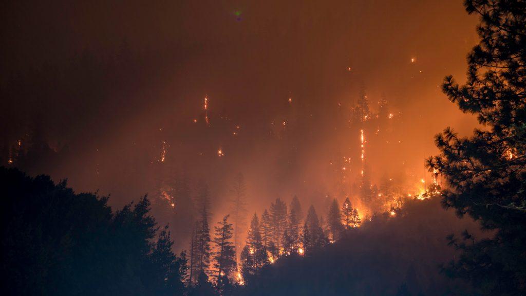 Wilderness Fire